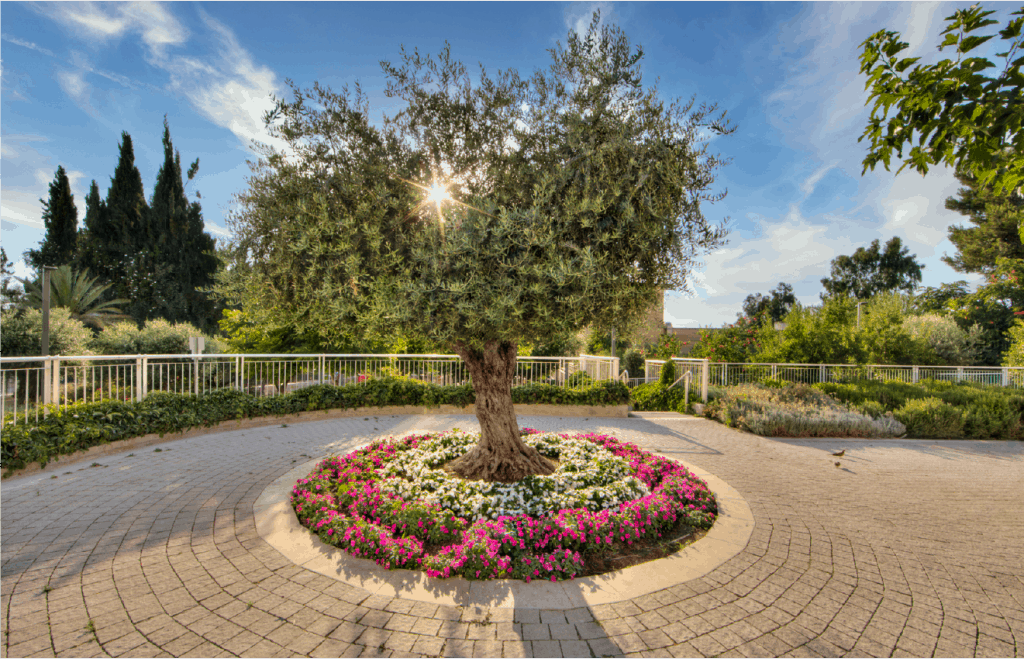 tree at sunrise jerusalem